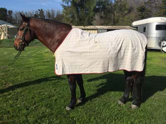 Are your horse's clothes affecting your horse?